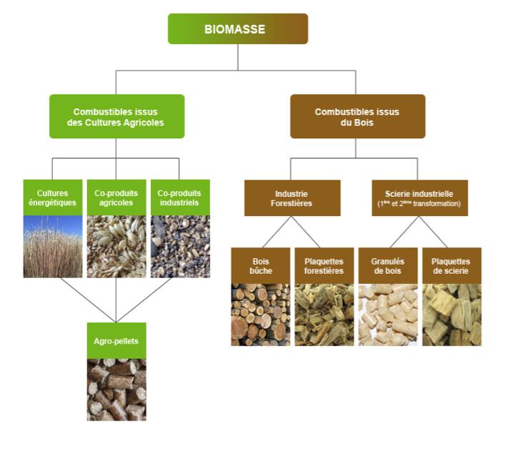graph-biomasse